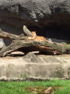 Hamborg Zoo, Hagenbeck